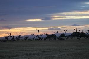 wild fowl sunset 9/9/2015
